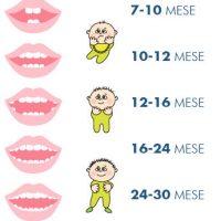 crescita dei denti decidui (da latte)